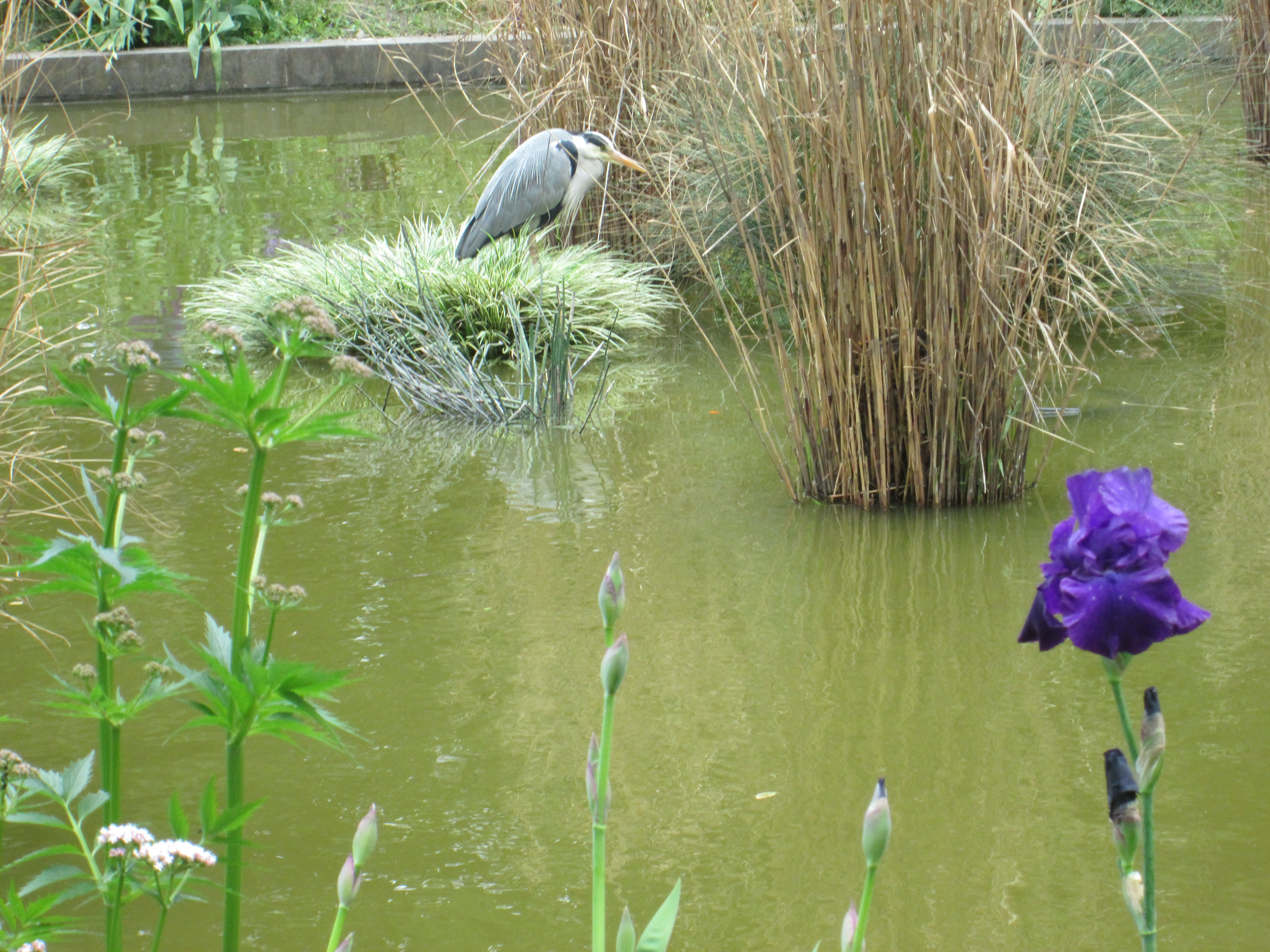 Heron and Iris at the Tuileries